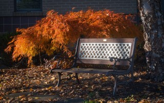 The Perfect Source for Outdoor Benches